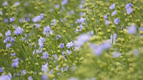 Flaxseed Oil (Linum Usitatissimum)